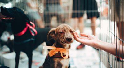 animal shelter pet adoption