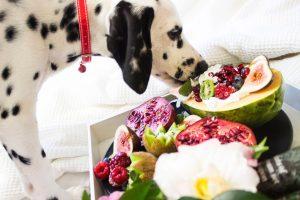dalmatian eating healthy dog treats such as fruits