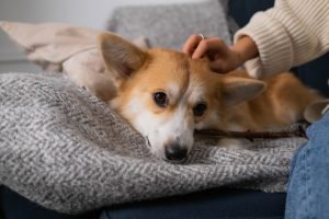 dog receiving dog massage