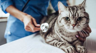 Hoe vaak moet je kat naar de dierenarts?