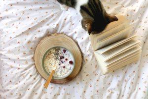 cat eating oatmeal