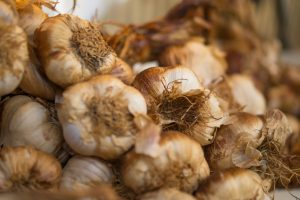 onions are toxic to dogs