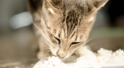 cat eating rice on the floor