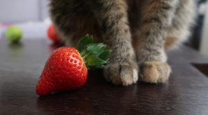 strawberry next to paws of a cat