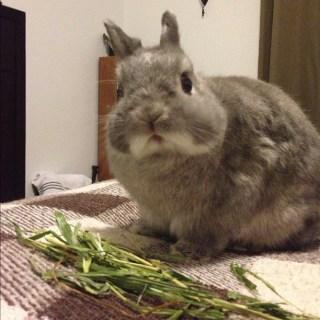 Eat hay