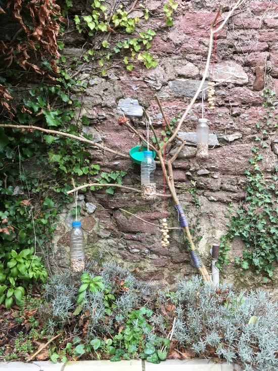 an old wall has a tree against it. On the tree home-made bird feeders made from plastic bottles holding nuts are hanging