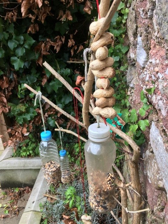 plastic bottles with nuts in them hanging up with peanuts strung on the string suspending them