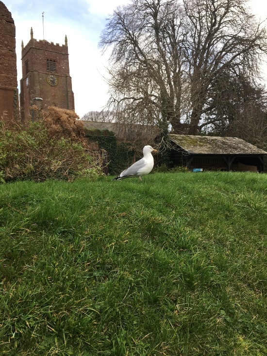 a seagull is on a grass bank behind are old building including a church next to big bare tree in winter