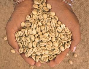 coffee sample