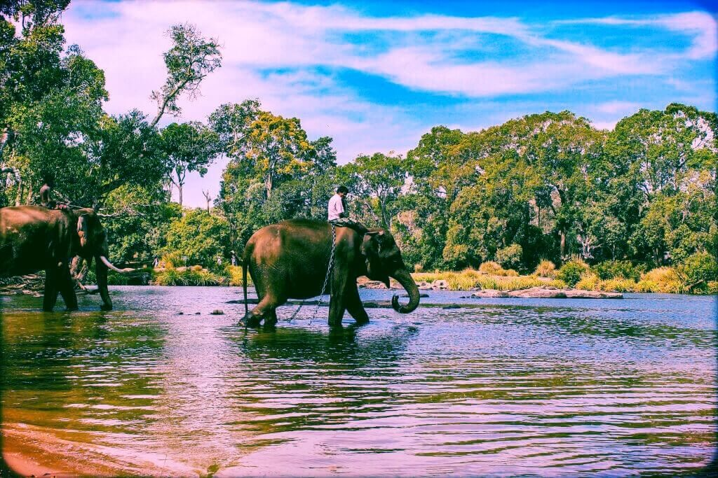 Full Day Coorg Local Sightseeing Tour with Dubare by Cab