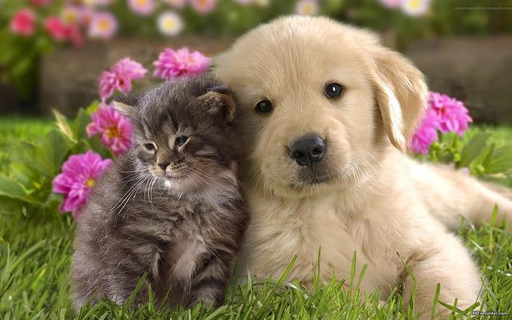 Sokak Hayvanlarına Bağış Kampanyası