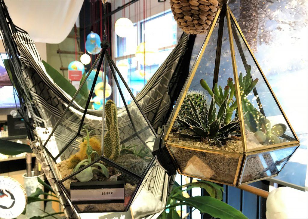terrarium nature et decouvertes