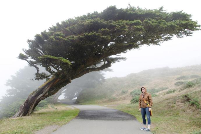 me_tree