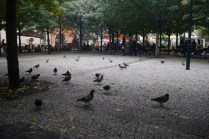 The randomness of pigeons