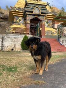 4-1 Bhutan Nunnery Dog 56986805_10215834695834567_6856285074627756032_n - Copy (2)