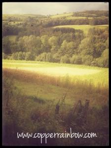 View of the fields from Glenarm forest