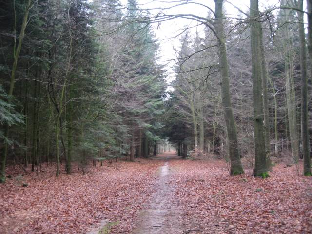 Westermark wood path
