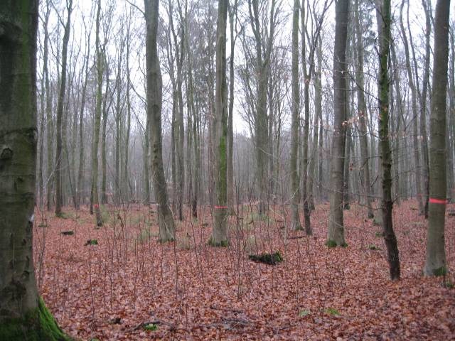 Westermark woodlands