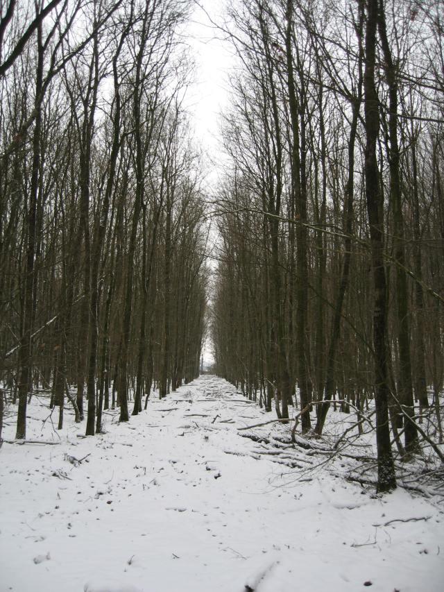 Bleak winter woods