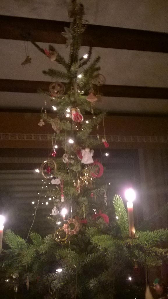Christmas tree close-up