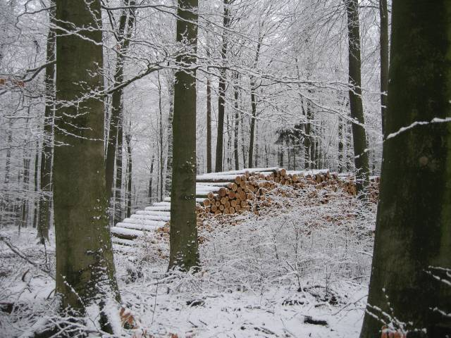 Snowy timber