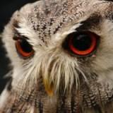 いきなり目が充血!白目が真っ赤になる原因は?治る期間、コンタクトや視力は平気?