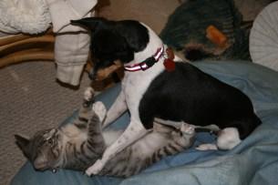Iris and kitten