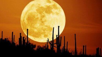 Photo of Лунный календарь на 2019 год