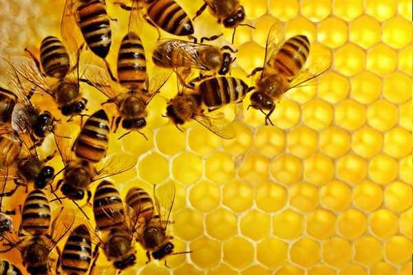 Соты медовые 1