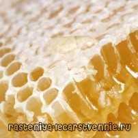 Пчелиный мед в сотах, польза и вред