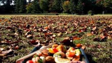 Photo of 10 правил, чтобы не набрать лишних килограммов осенью