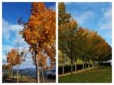 autumn-collage-2