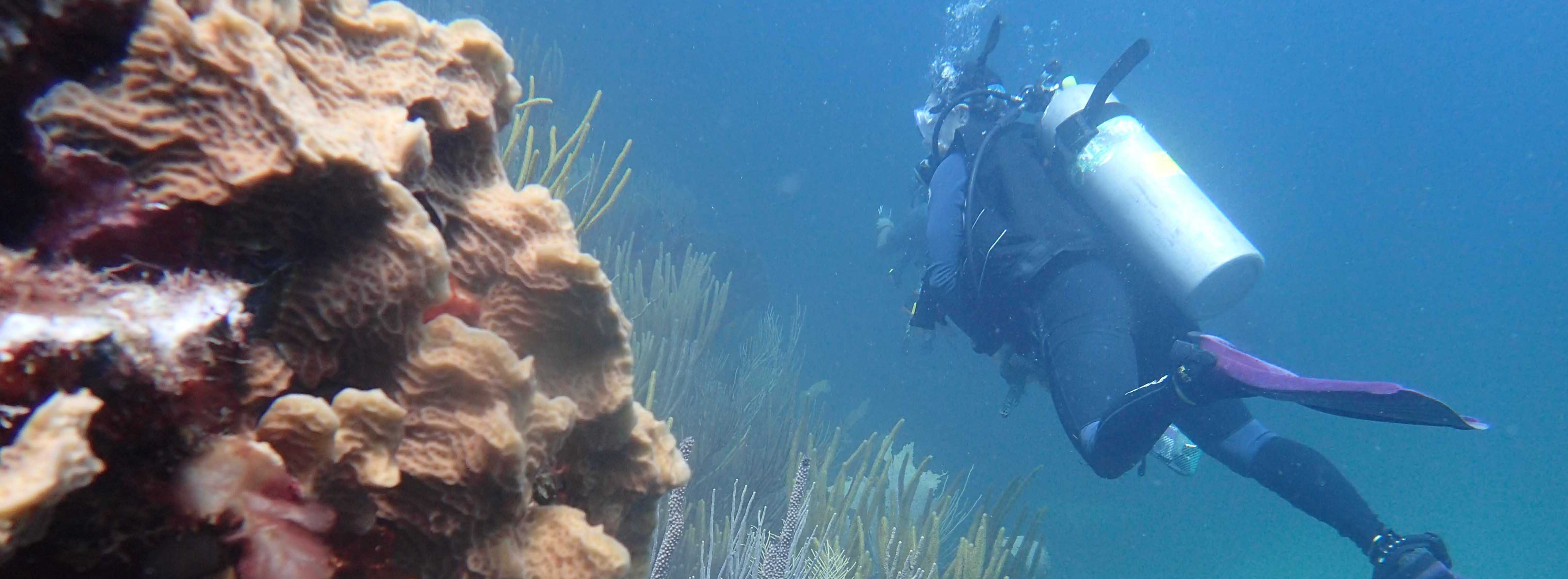 Noaa Coral Reef Conservation Program Crcp Home Page