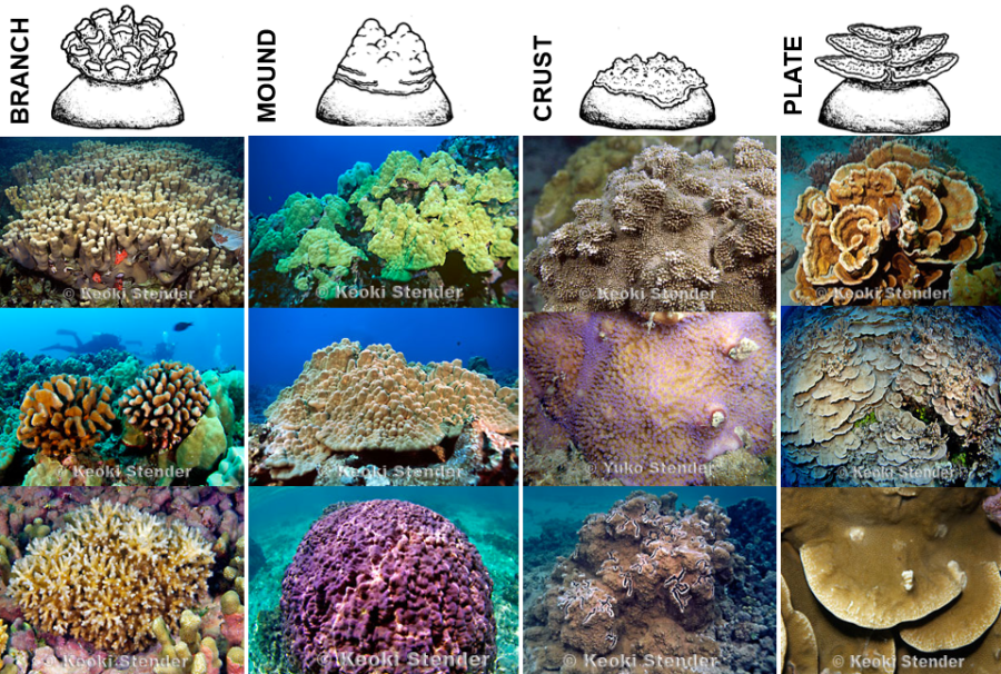 coral shapes