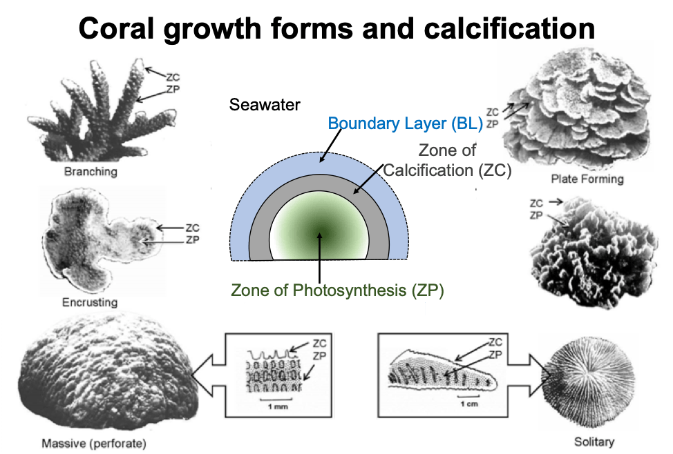 growth_forms