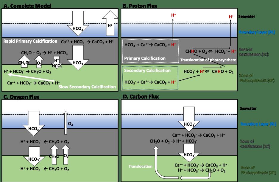 proton_flux_model