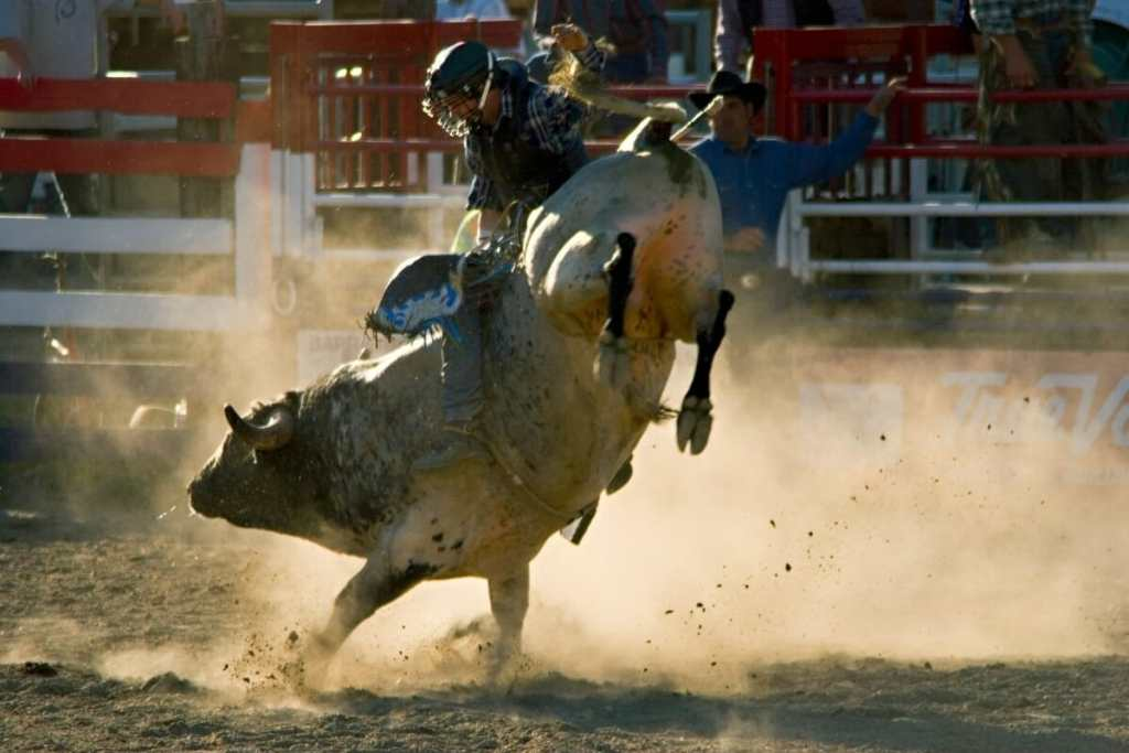 Rodeo in St George