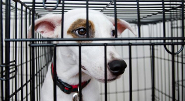 Coral Springs Code Enforcement Bans Sidewalk Pet Adoptions