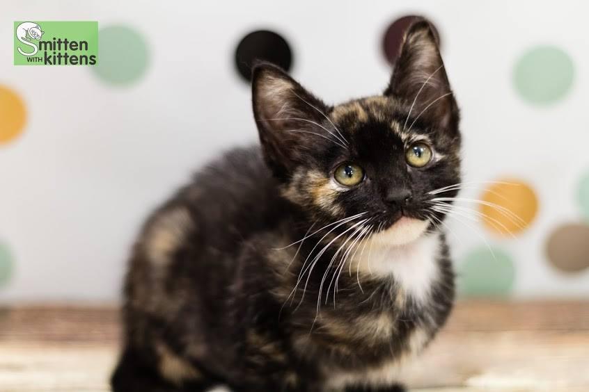 kitten-smitten