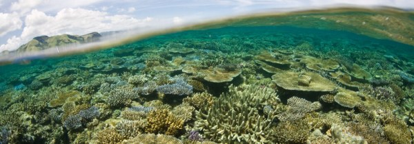 Photography - Coral Triangle Adventures