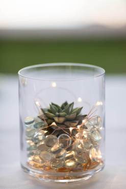 Succulent and Fairy Lights