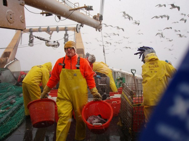 NOAA Fisheries scientist Jon Hare carries baskets of fish during the 2006 winter trawl survey on the Northeast U.S. continental shelf. This annual survey started in the 1960s and has been instrumental in documenting changes in fish distributions over the last four decades. Credit: NOAA