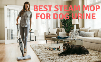 Best steam mop for dog urine