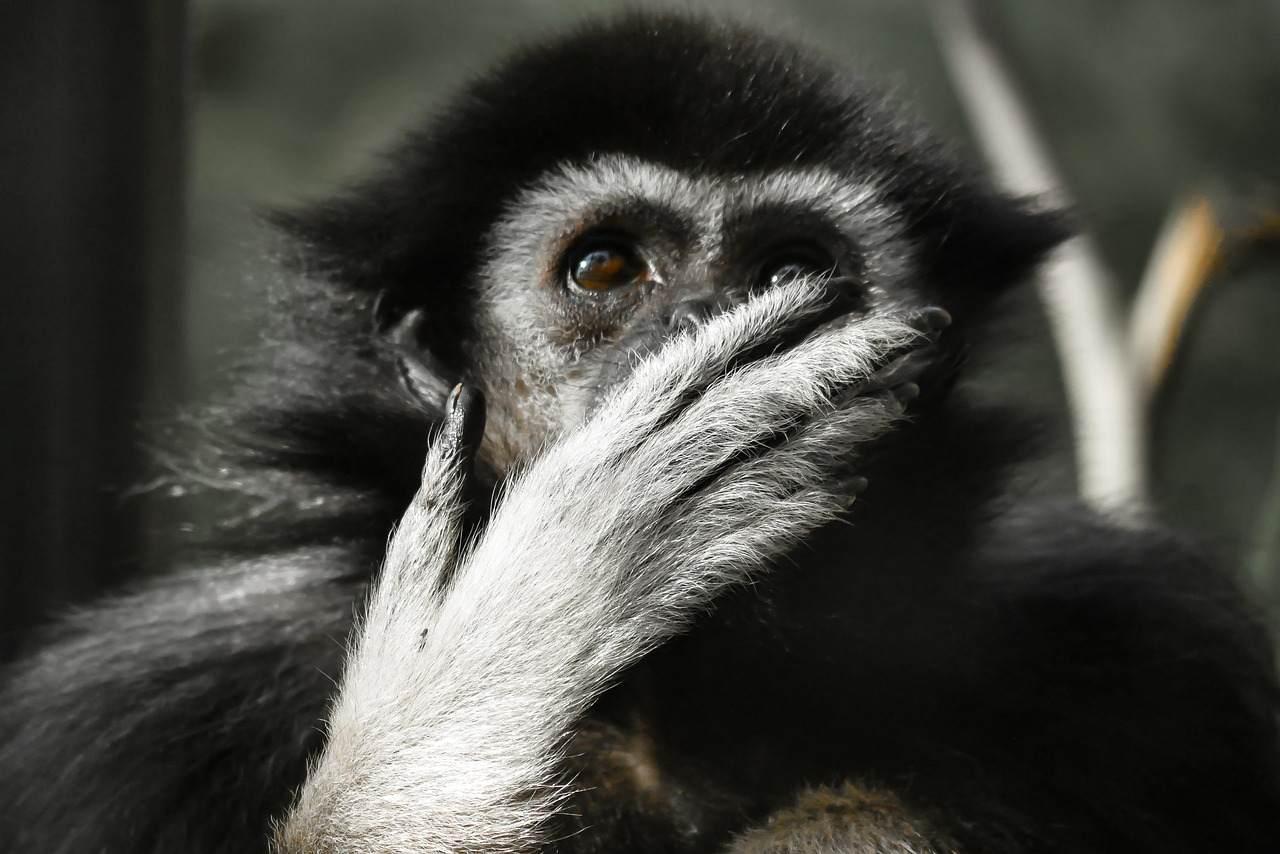 『猿の手...?』家宝にまつわる怖い話|洒落怖まとめ