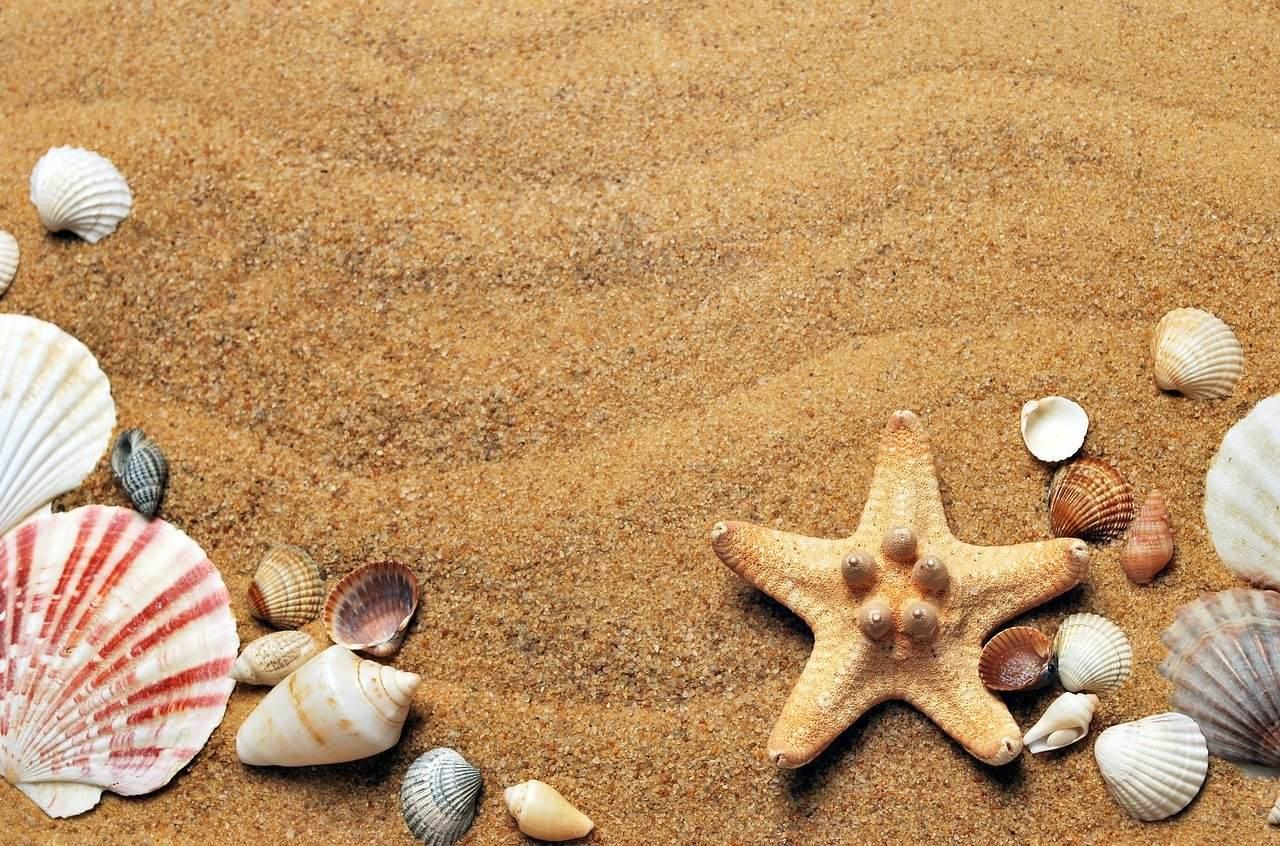 海にまつわる怖い話『海岸で貝拾い』|洒落怖・海の怪談