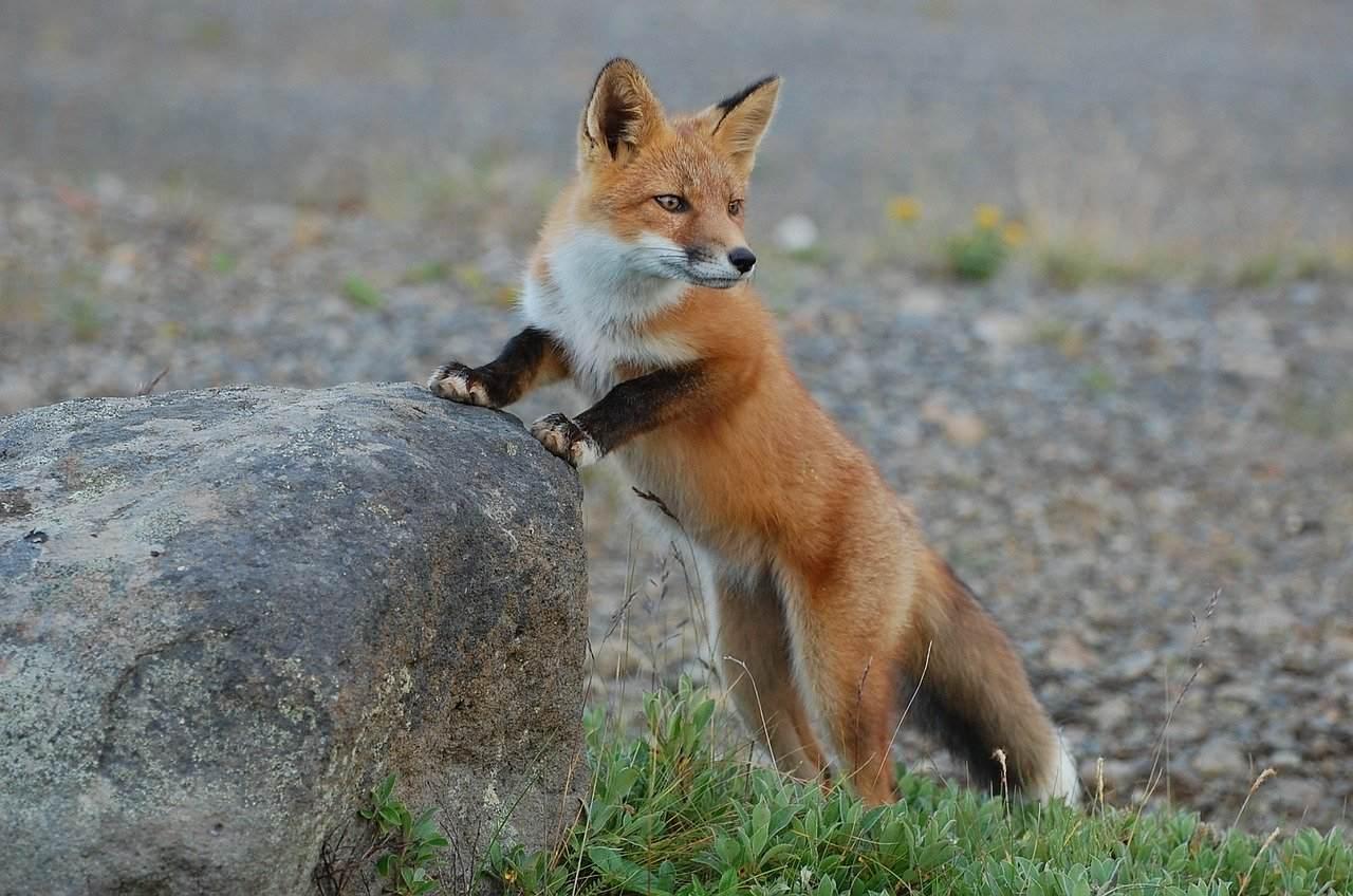 時空にまつわる不思議な体験『狐に化かされた?』など短編全5話