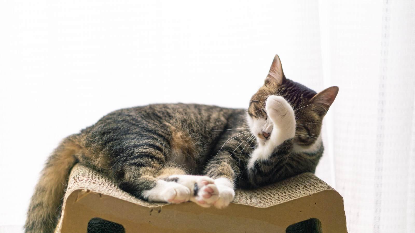心霊ちょっといい話『人懐こい猫』など短編全10話