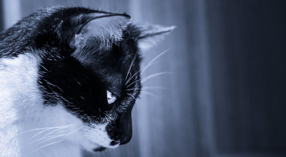 なんか笑える心霊体験『猫の呪い』