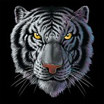 1015Wild Side New Blog Tiger