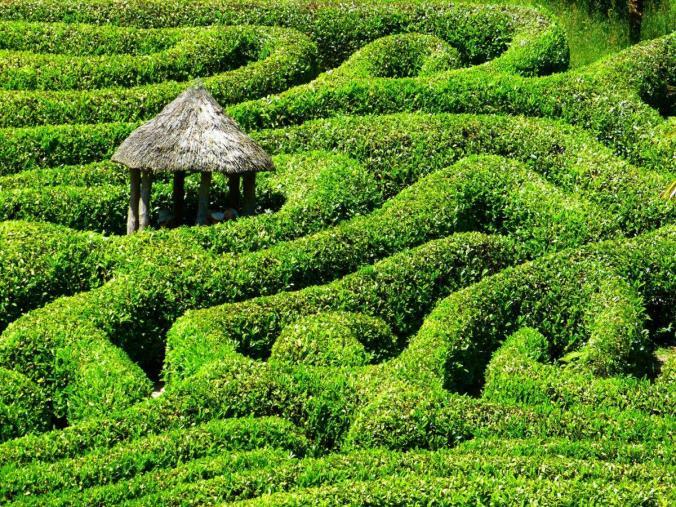 Le test de résolution du labyrinthe